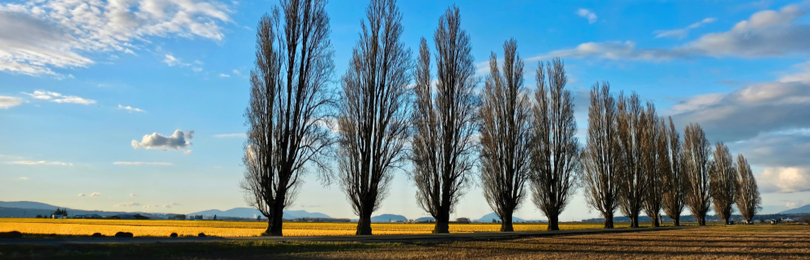 Line_Of_Silhouetted_Trees_Against_Evening_Sky